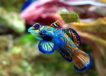 poisson2.jpg