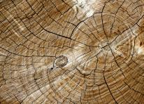 Tronc d arbre1